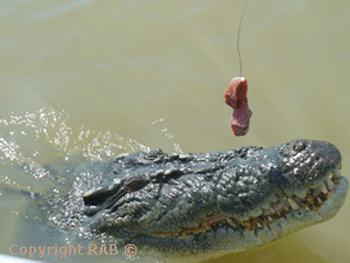 Adelaide River Cruises with Morgan Bowman on their  wildlife and jumping crocodile cruise  |  Credits RAB
