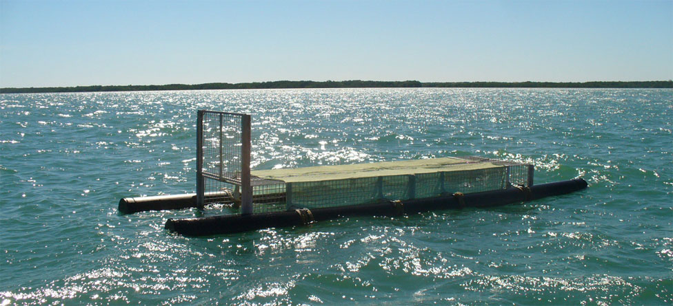 A photo I took of this 20 foot long crocodile trap in Darwin Harbour in West Arm | Credits Rob Berude