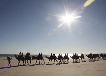 No trip to broome is complete without a camel short camel trek  | Credits AFox